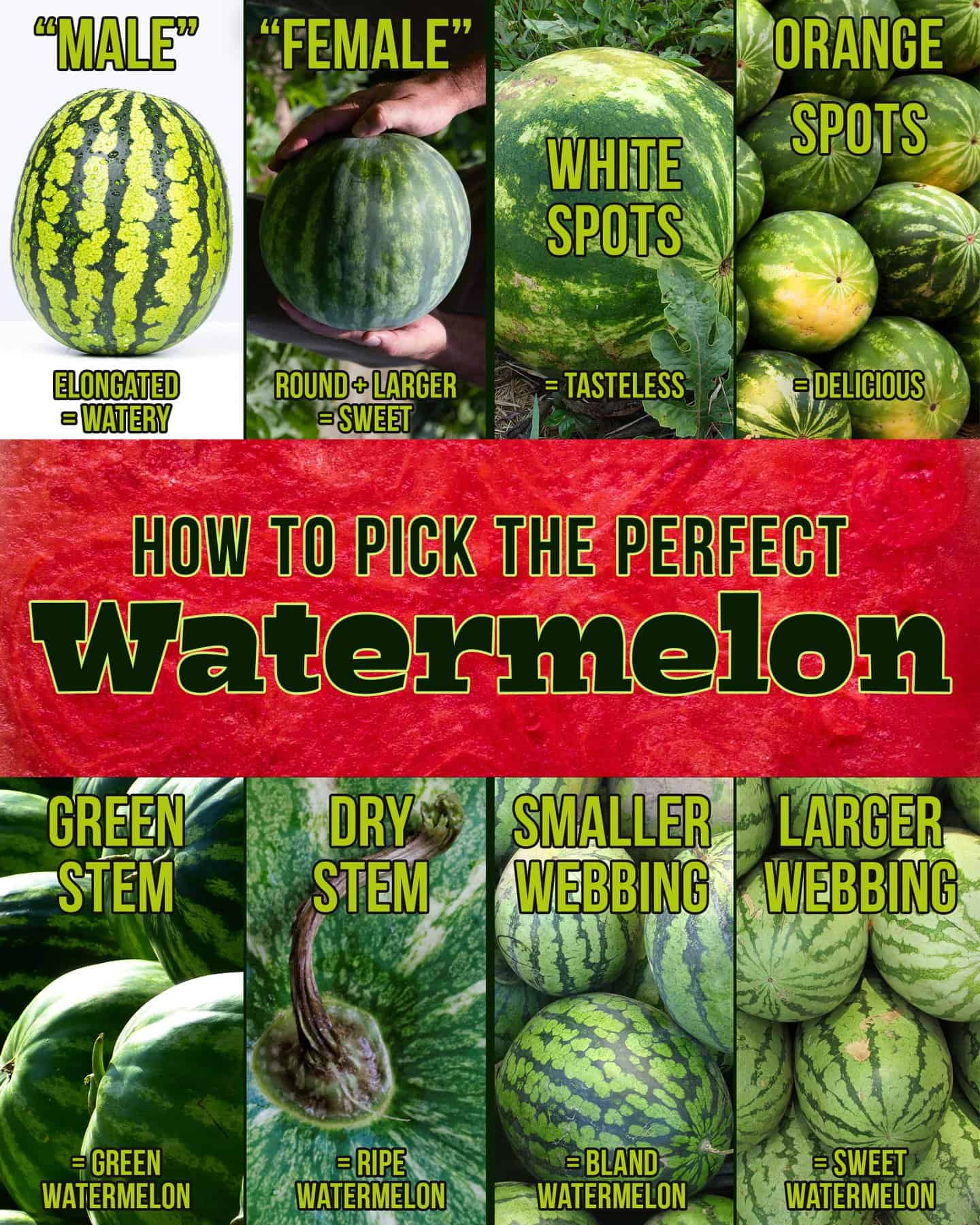 Visual guide to picking the perfect watermelon. Elongated watermelons are watery. Round watermelons are sweeter. White spots mean they are tasteless. Orange spots are delicious. Green stems mean the watermelon isn't ripe while a dry stem means it is right. Smaller webbing means the watermelon is bland while larger webbing means it is sweet.